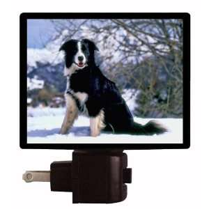 Dog Night Light  Border Collie  LED NIGHT LIGHT