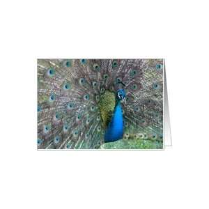 Colorful Peacock Feathers Note Card Card Health